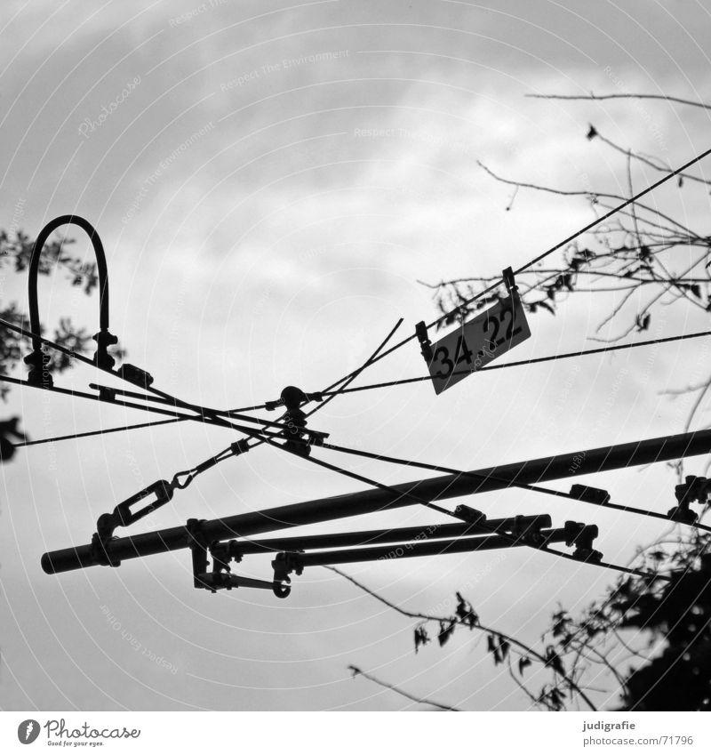34.22 Ende Oberleitung Stab Straßenbahn U-Bahn durcheinander schwarz Baum Sträucher Blatt gekreuzt Verbundenheit verbinden Draht chaotisch Schwarzweißfoto