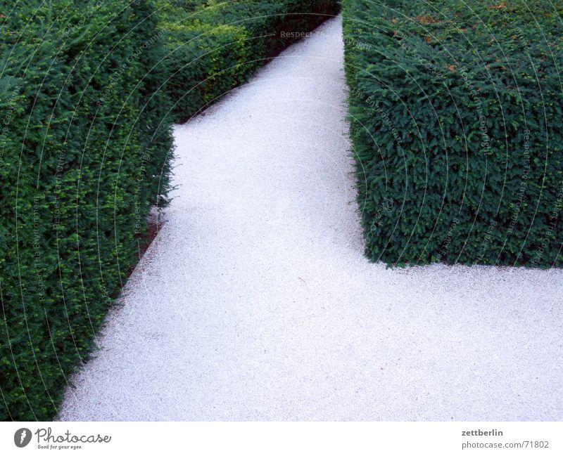 Gartenbau 1 weiß grün grau Eingang Kies Ausgang Hecke Irrgarten Innenhof Ausweg Regierungssitz Irrweg Dornröschen