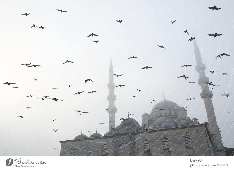 Nebel am Goldenen Horn blau alt schön schwarz dunkel grau Religion & Glaube fliegen Vogel Fassade Nebel groß ästhetisch fantastisch Turm Macht
