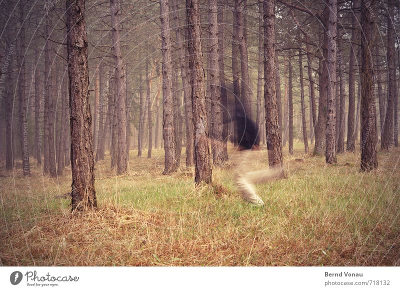 run forest !!! Mensch maskulin Mann Erwachsene 1 30-45 Jahre 45-60 Jahre rennen Flucht Unschärfe geheimnisvoll Baumstamm Kiefer Gras Nebel Richtung quer