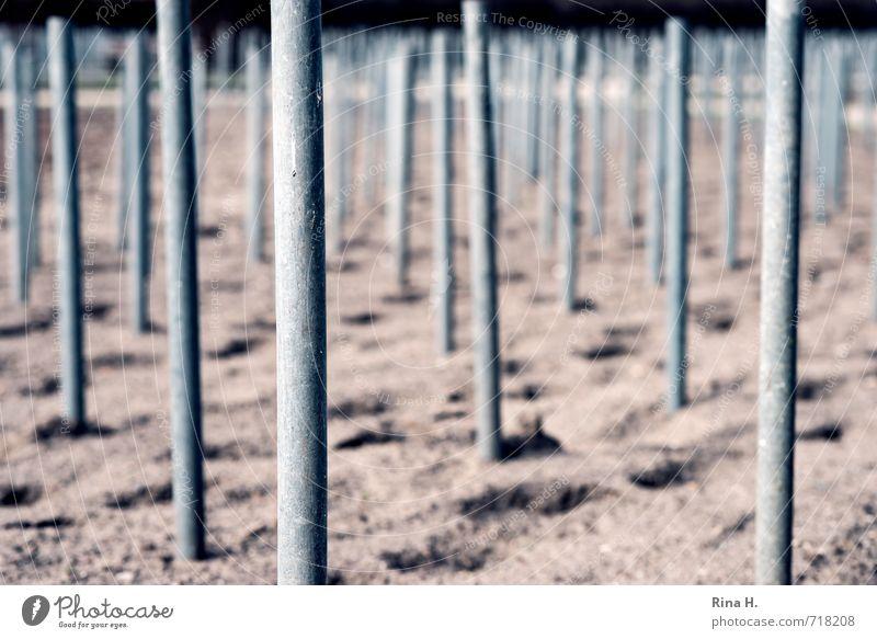 Reih & Glied Garten Sand stehen Ordnung Symmetrie Pfosten Stock Spuren Gartenbau Strebe Gedeckte Farben Außenaufnahme Menschenleer Textfreiraum unten