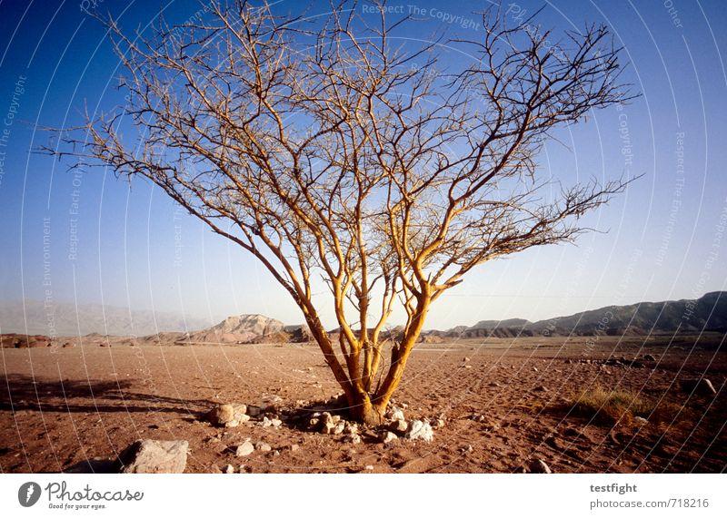 Detonation Umwelt Natur Landschaft Pflanze Himmel Klima Wetter Schönes Wetter Baum Wüste Ferne Wärme Tapferkeit selbstbewußt Optimismus Ende Endzeitstimmung