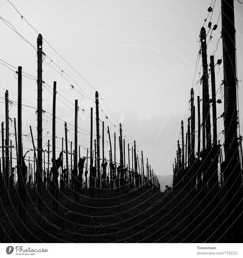 AST 7 | Aufstieg zum Lukow-Hügel, II Natur Pflanze dunkel schwarz Umwelt Gefühle Holz grau Metall Wachstum ästhetisch Ausflug einfach Wein Draht Pfosten