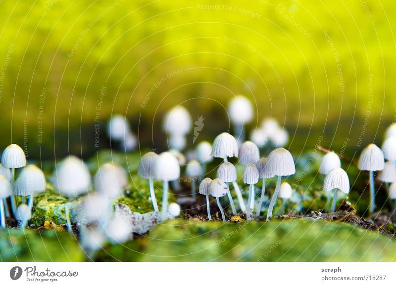Fungi Pilz Makroaufnahme Sporen Natur herbstlich Pilzhut Menschengruppe Frucht cap Lamelle Pflanze Schwüle Herbst toadstool Wachstum Symbiose natürlich grün