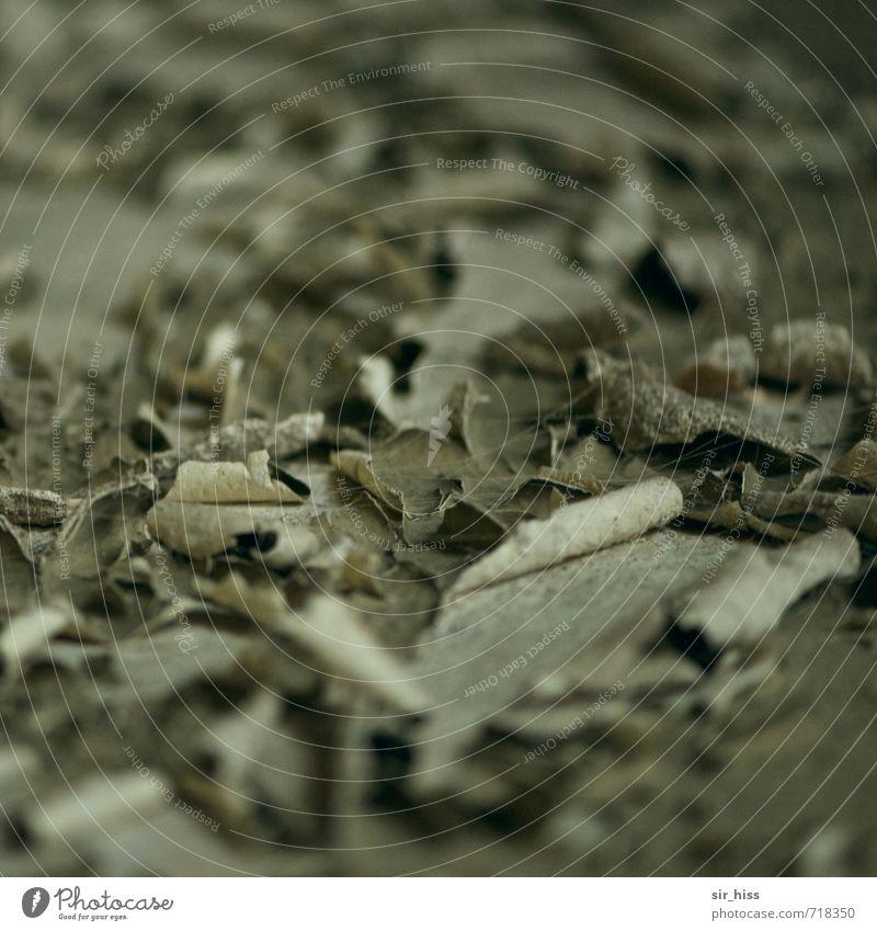 HALLE/S.-TOUR | Der Lack ist ab. alt grün Einsamkeit dunkel Wand Farbstoff grau braun springen Häusliches Leben trist Vergänglichkeit retro historisch Bauwerk Verfall