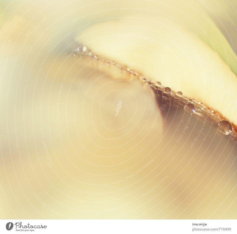 Tautropfen .Oo.O. Umwelt Natur Pflanze Frühling Sommer Regen Blume Rose Tulpe Blatt Wasser gelb orange Wassertropfen Romantik Frühlingsfarbe Frühlingsblume