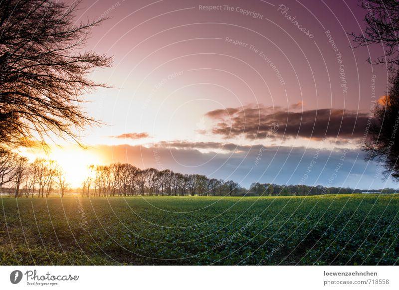Farbspiel am Abend Natur Landschaft Sonnenaufgang Sonnenuntergang Frühling Schönes Wetter Nutzpflanze Feld Blühend Erholung genießen leuchten Wachstum