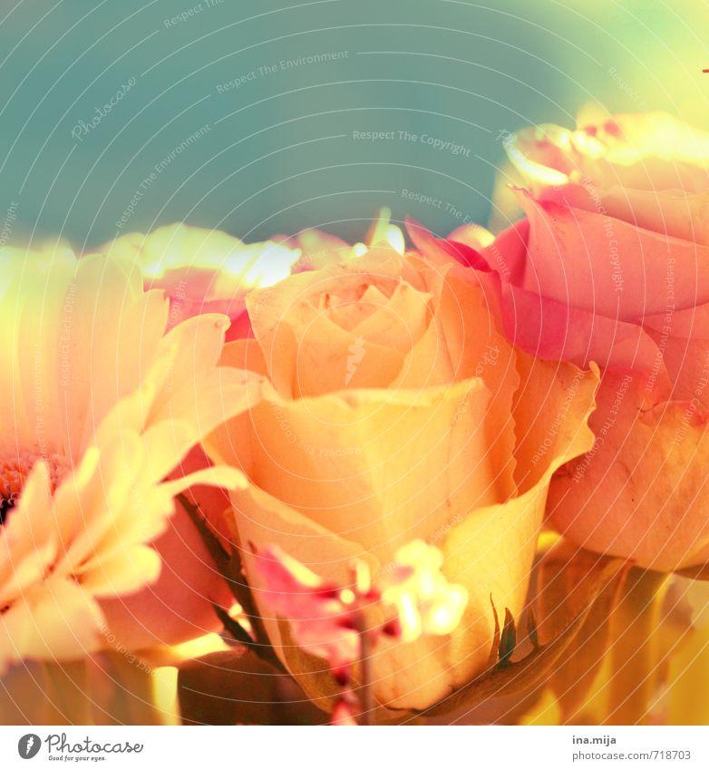 der Rose süßer Duft Feste & Feiern Valentinstag Muttertag Umwelt Natur Pflanze Blume Blüte Fröhlichkeit frisch schön blau mehrfarbig gelb rosa Romantik