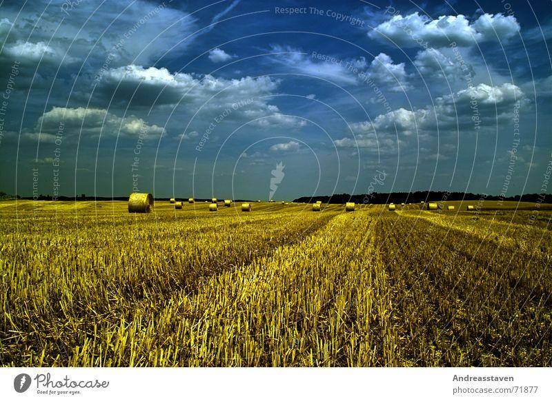 Feld Sommer Gras Himmel Wolken Hintergrundbild field Rasen blau sky blue wallpaper sun grey