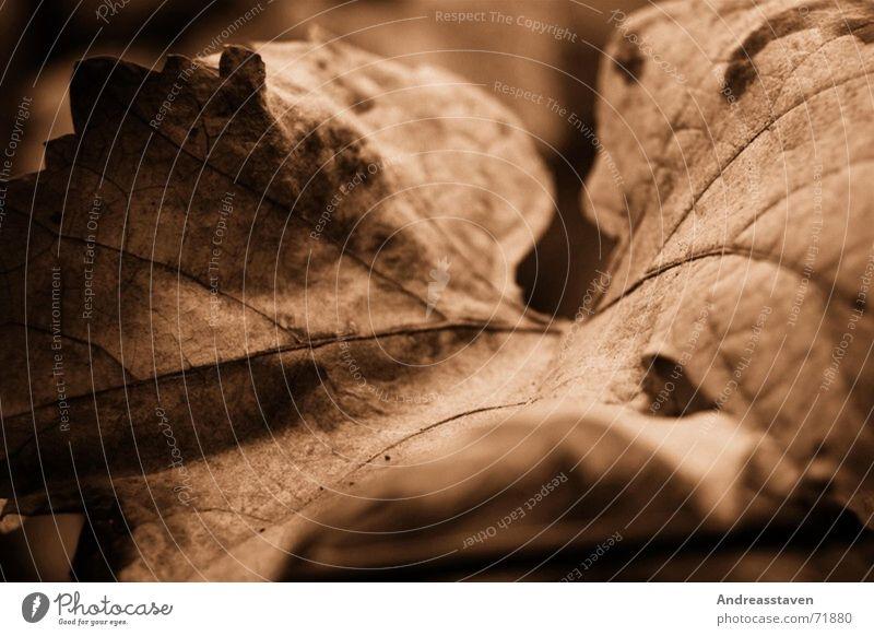 Blatt braun Baum Baumrinde Romantik träumen alt broun Zacken Natur tree Herz hearth