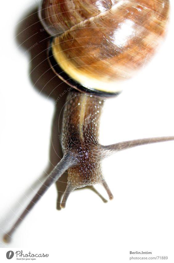 Raving Slug weiß Farbe Schnecke Fühler krabbeln gepanzert Schleim