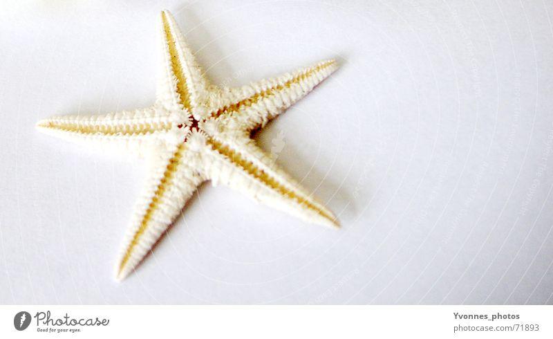 kleiner stern, ich hab dich gern... Wasser weiß Meer Sommer Strand Ferien & Urlaub & Reisen See hell Küste Fisch Stern (Symbol) Insel tauchen Ostsee Aquarium