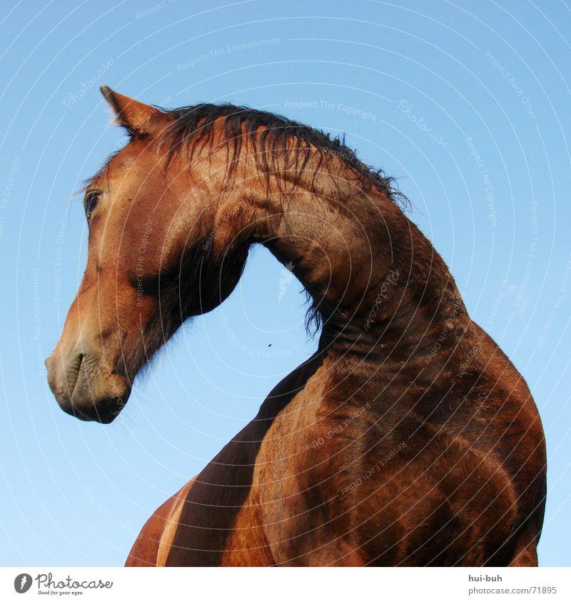 drehung schön Tier Suche groß hoch Pferd unten stark drehen Anmut
