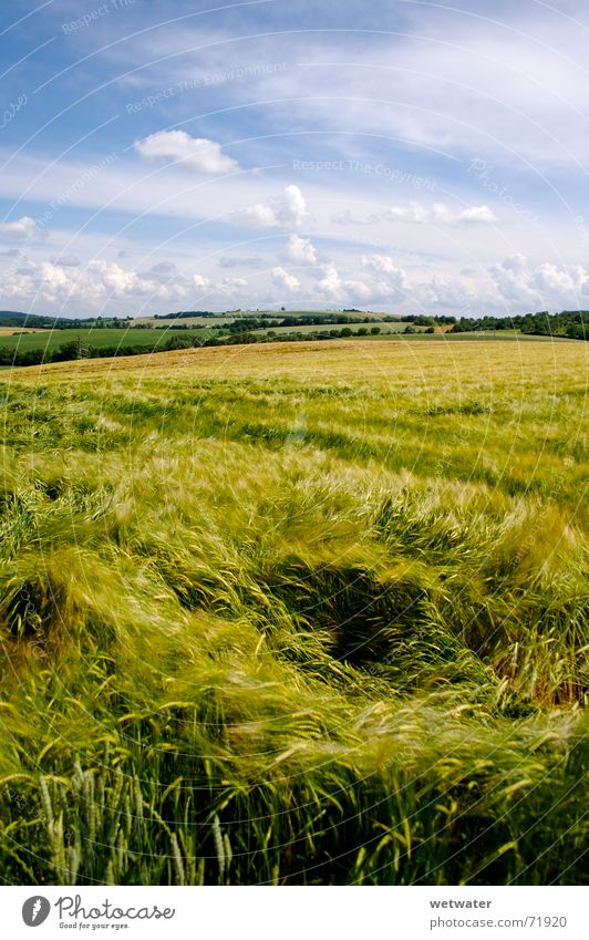 corntwister Himmel grün blau Sommer Wolken Wiese Wärme Landschaft Feld Wind frisch Romantik Physik Hügel Ernte Korn