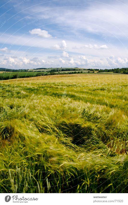 corntwister Tornado Feld Wiese Wolken Himmel Sommer Physik Romantik Hügel grün frisch Wind landscape Verwirbelung Landschaft Korn field meadow clouds sky