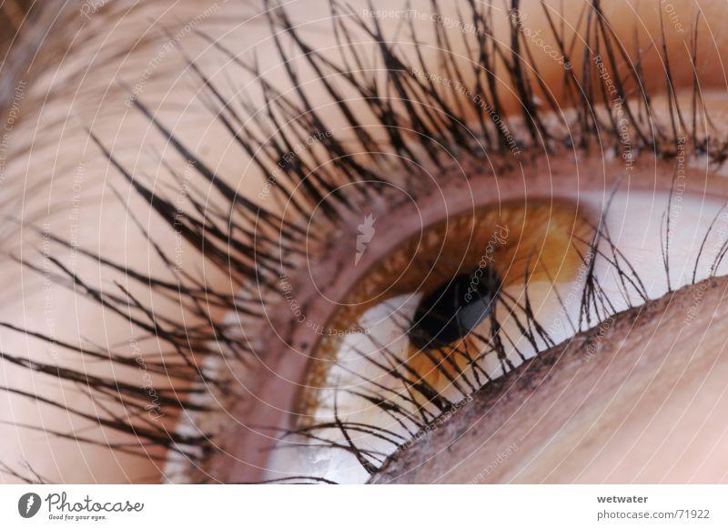 brown eye braun Wimpern Regenbogenhaut Schminke Schminken Makroaufnahme Organ Frau Auge Reflexion & Spiegelung reflection Haare & Frisuren hair close