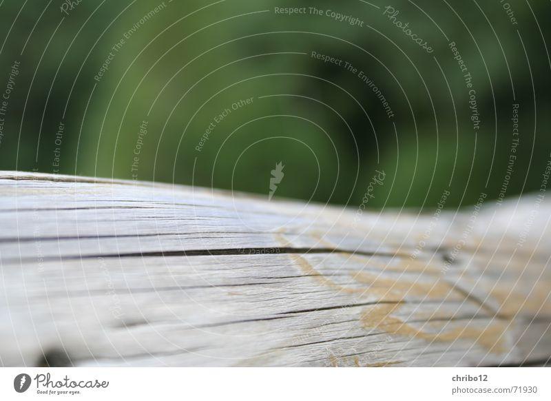 baumstamm_chribo.eu Baumstamm Tod Holz grün Makroaufnahme Nahaufnahme Natur Ast