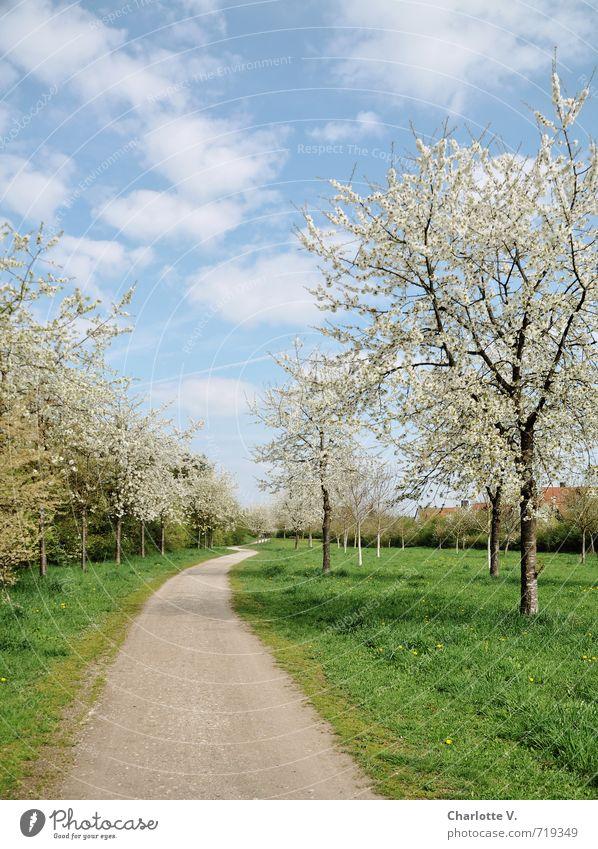 Frühlingsweg Natur blau schön grün weiß Pflanze Baum Landschaft ruhig Ferne Umwelt Wege & Pfade Gras Glück hell
