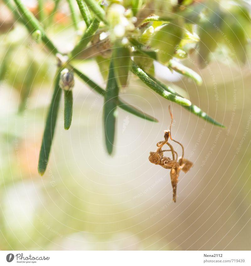 Baumschmuck Natur Pflanze Sommer Blatt Wald Umwelt Berge u. Gebirge Frühling Garten Luft Park Sträucher Schönes Wetter Schmuck hängen