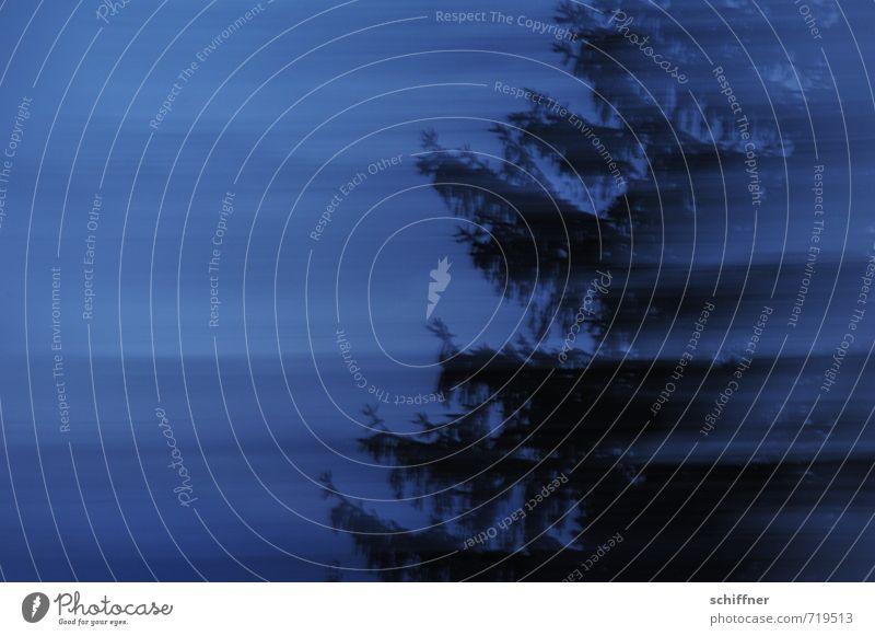 Horrorbaum Umwelt Natur Nachthimmel schlechtes Wetter Pflanze Baum dunkel blau schwarz Horrorfilm gruselig unheimlich Teleportation Geschwindigkeit schnelllebig