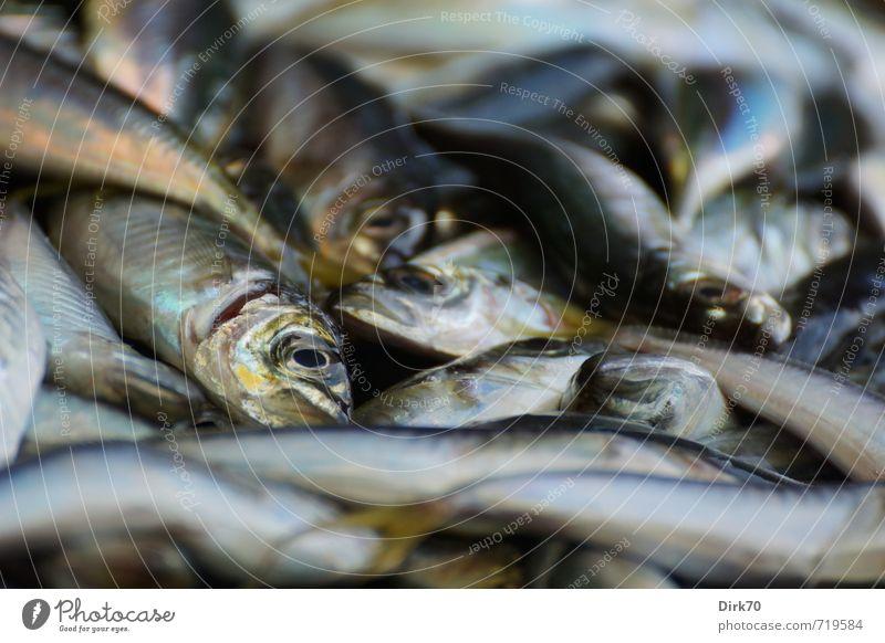 Kleine Fische blau weiß Tier schwarz Tod braun Lebensmittel liegen glänzend Wildtier frisch Ernährung Tiergesicht türkis