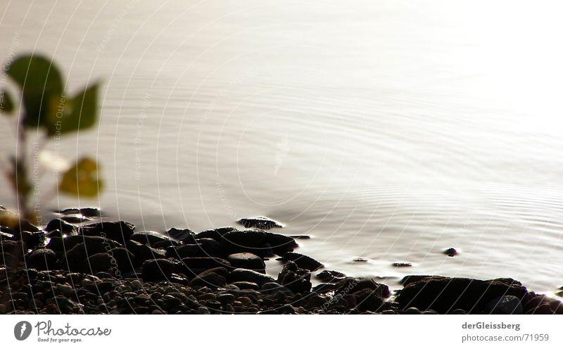 ruhe, calmness See Strand dunkel grün Pflanze hart grau Licht grell Sommer besonnen Gelassenheit Wasser lichtvoll ruhig hard Stein hell Küste Sonne Klarheit