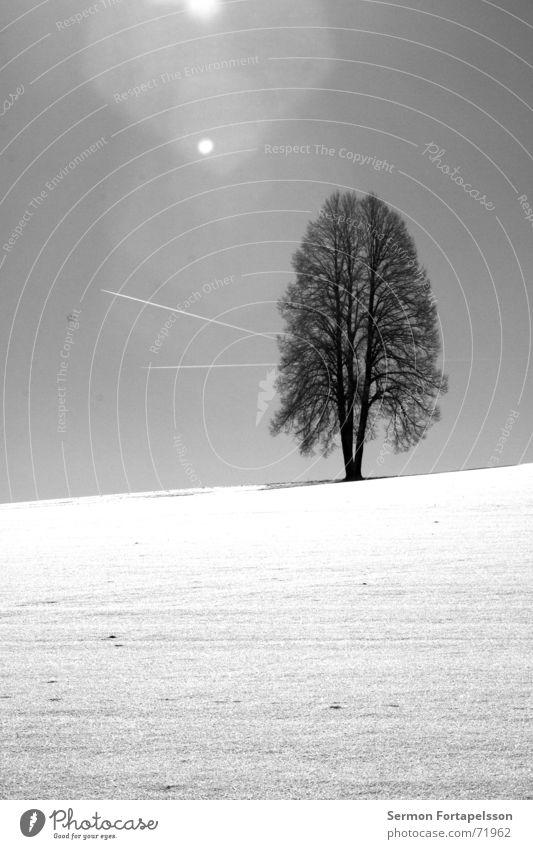 winterbaum Baum Winter Eiche Feld Waldrand weiß Flugzeug Wolken Kondensstreifen Blende Lichtfleck Einsamkeit Dezember Januar Februar Jahreszeiten Horizont
