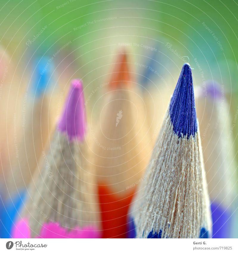 spitzenmäßig Farbstift Schreibstift Detailaufnahme Makroaufnahme mehrfarbig blau rosa Schwache Tiefenschärfe Textfreiraum links Textfreiraum oben Spitze Köpfe