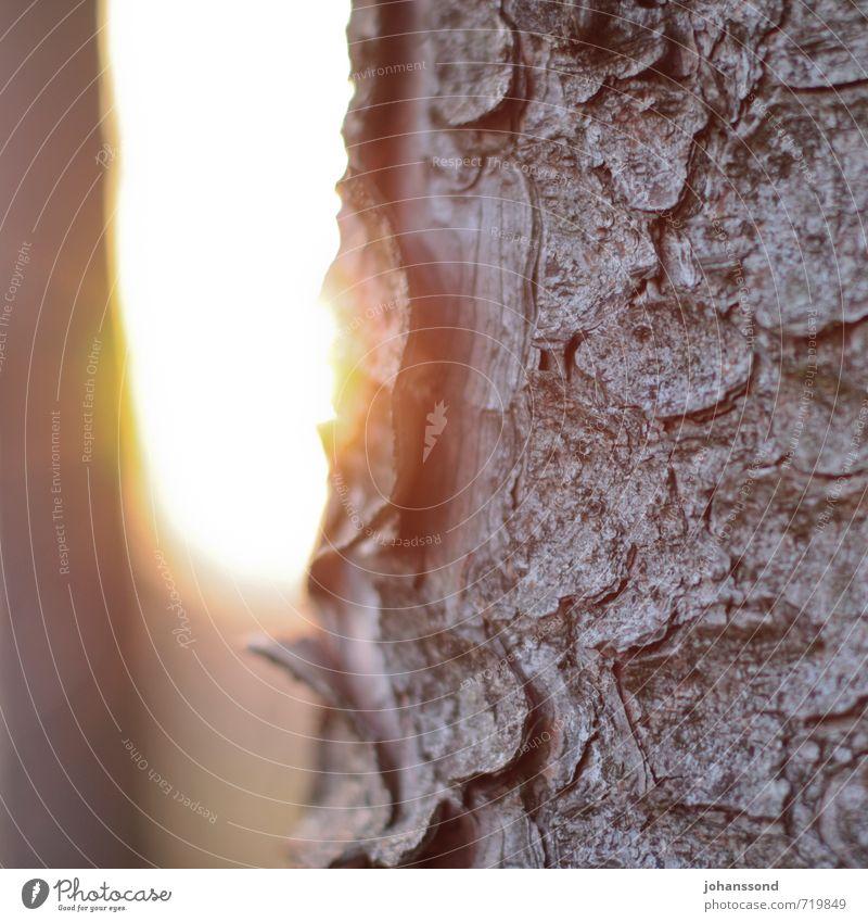 Baumstamm im Gegenlicht Natur Sonne Baum ruhig Winter Wald gelb Wärme braun Stimmung träumen Kraft wild Warmherzigkeit Vergänglichkeit Freundlichkeit