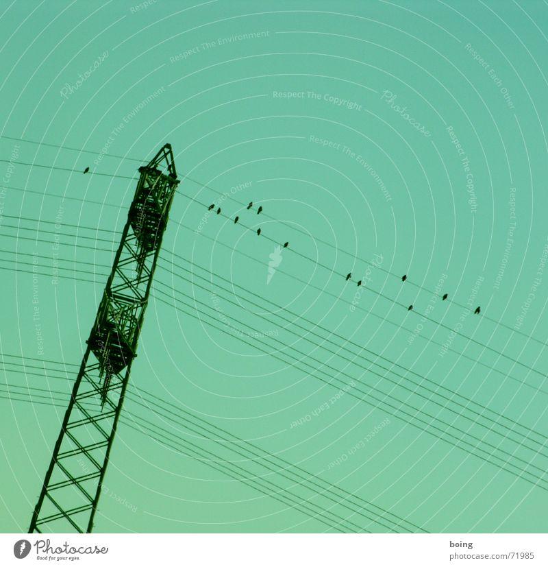 ganz schön rechtslastig hier Winter Herbst Zufriedenheit Vogel Energie Industrie Elektrizität Kommunizieren Kabel Strommast Hochspannungsleitung umfallen Knick