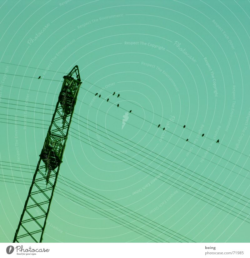 ganz schön rechtslastig hier Zugvogel Herbst Winter Versammlung Zufriedenheit Knick umfallen Elektrizität Energie Vogel Hochspannungsleitung Kabel Strommast