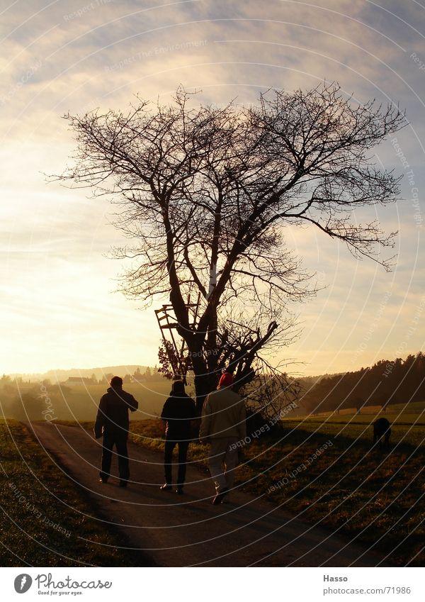 Winterspaziergang Mensch Baum Feld kalt Hund Fußweg Wiese Sonntag Schal Mütze Spaziergang Himmel Wind warmer kakao Außenaufnahme