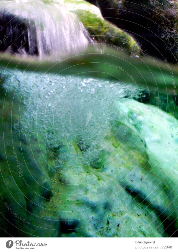 Mixed Elements Wasser oben Stein Küste See tauchen Zoo unten tief Frankfurt am Main Fensterscheibe Luftblase Wasserfall fließen Wurzel Sauerstoff
