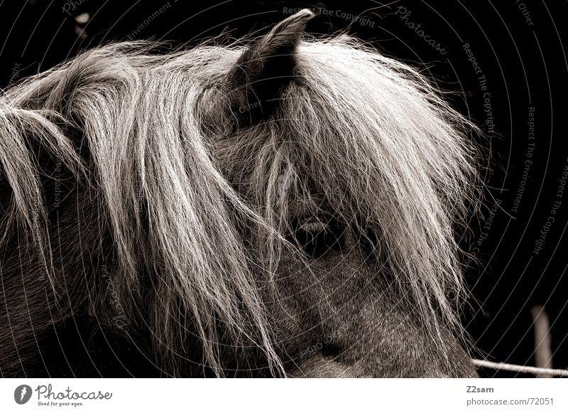 horse/profil Pferd Mähne Fell stehen Tier Silhouette Ohr Haare & Frisuren animal Blick Profil dublex Schwarzweißfoto