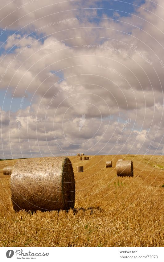 Heuballen Feld Wolken Wolkenhimmel Himmel Stoppelfeld Sommer Herbst Landwirtschaft gelb field clouds sky Ernte Korn landscape Landschaft Schönes Wetter sunny