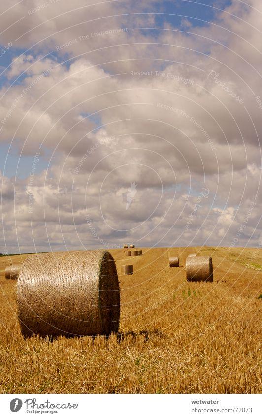 Heuballen Himmel Sommer Wolken gelb Herbst Landschaft Feld gold Landwirtschaft Ernte Korn Schönes Wetter Wolkenhimmel Stoppelfeld