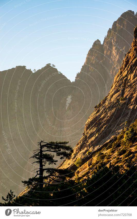 Sonne, die auf Zeder fällt Natur Ferien & Urlaub & Reisen Pflanze Sommer Baum Landschaft Ferne Umwelt Berge u. Gebirge Gefühle Freiheit Felsen gold Tourismus wandern Klima