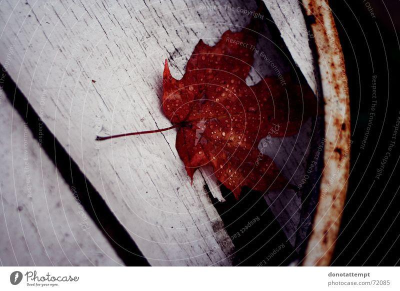 red leaf.. Blatt rot Pflanze Herbst wet blattrand Wassertropfen
