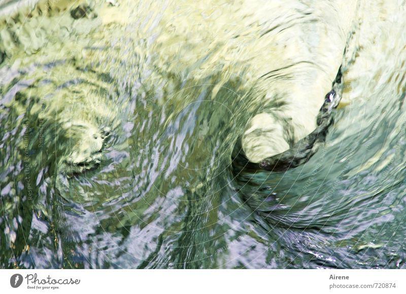 Zwirbel Natur Urelemente Wasser Wasserwirbel Spirale Kreis drehen außergewöhnlich Flüssigkeit nass gold grün Abenteuer Sog Urgewalt Kraft paarweise