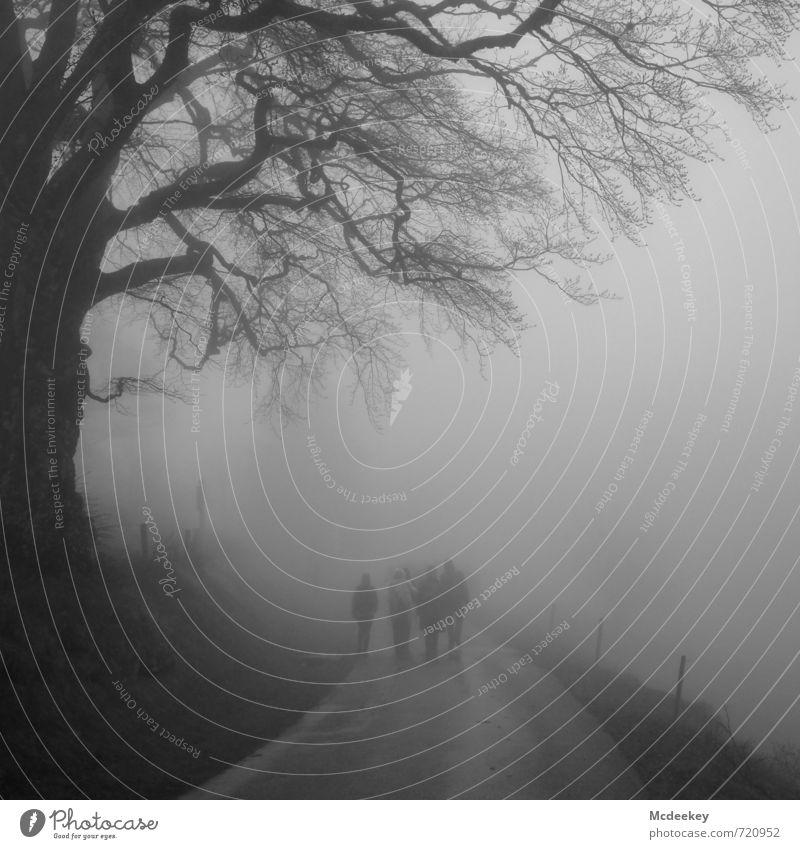 vernebelt Mensch Natur Jugendliche weiß Pflanze Baum Landschaft 18-30 Jahre schwarz dunkel kalt Wald Erwachsene Umwelt Wiese Wege & Pfade