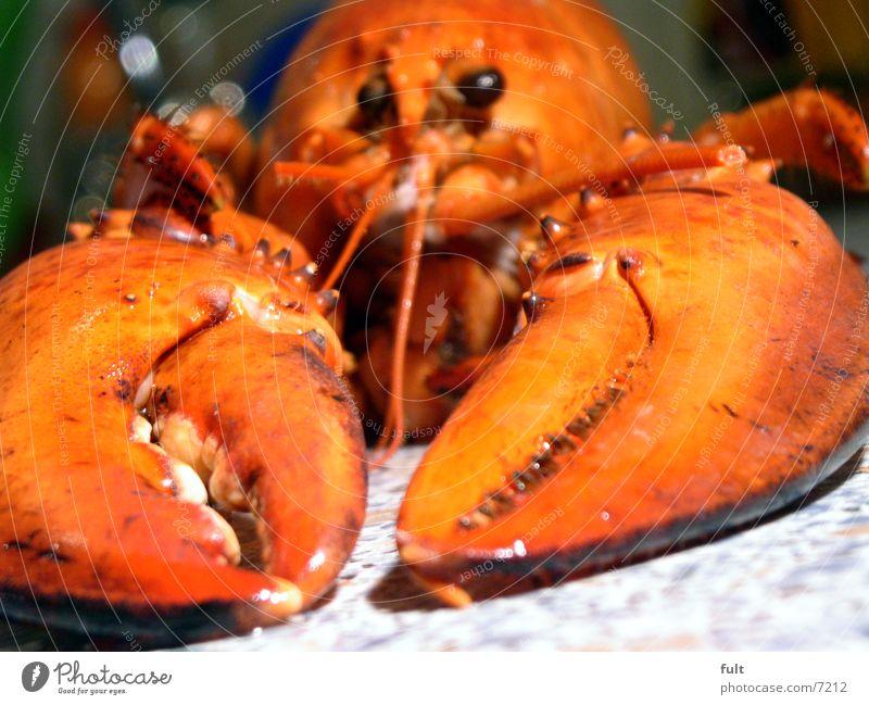 hummer Hummer Zange rot Kneifer See Meer Tier Ernährung bewegungslos hart Meeresfrüchte Natur Auge Tod liegen stief Appetit & Hunger Meerestier Fisch Schere