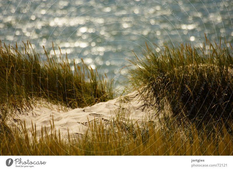 Hinter den Dünen, da Meer Sommer Freude Strand Ferien & Urlaub & Reisen Gras Sand Küste Freizeit & Hobby Schilfrohr Halm Stranddüne Dänemark Skandinavien