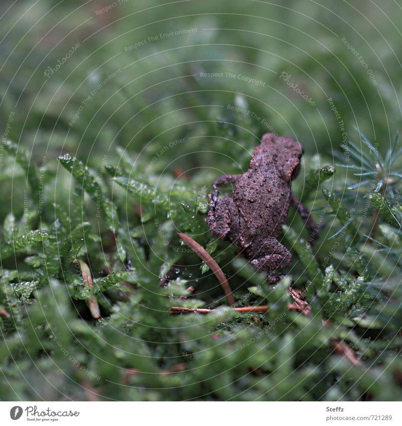 is mir wurscht.. Natur grün Sommer Tier Wald Umwelt Gras braun einzeln Lebewesen Hinterteil Frosch krabbeln hüpfen Ablehnung Waldboden