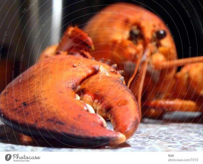 hummer Natur rot Meer Auge Tier Ernährung Tod See liegen Fisch Appetit & Hunger hart bewegungslos Schere Meeresfrüchte Brille