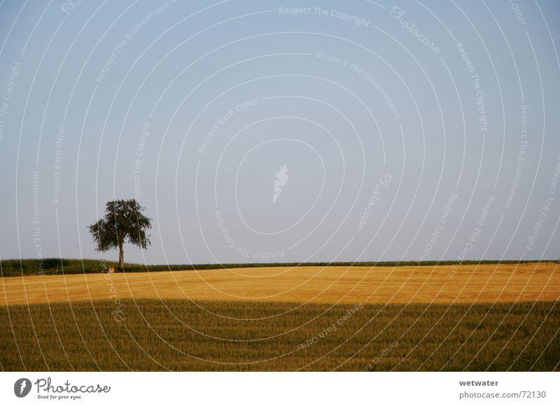 lonely tree Einsamkeit Baum Sommer Feld grün braun Himmel Sonnenuntergang Ferne Hügel Deutschland Kulturlandschaft Landwirtschaft August fields brown sky blau