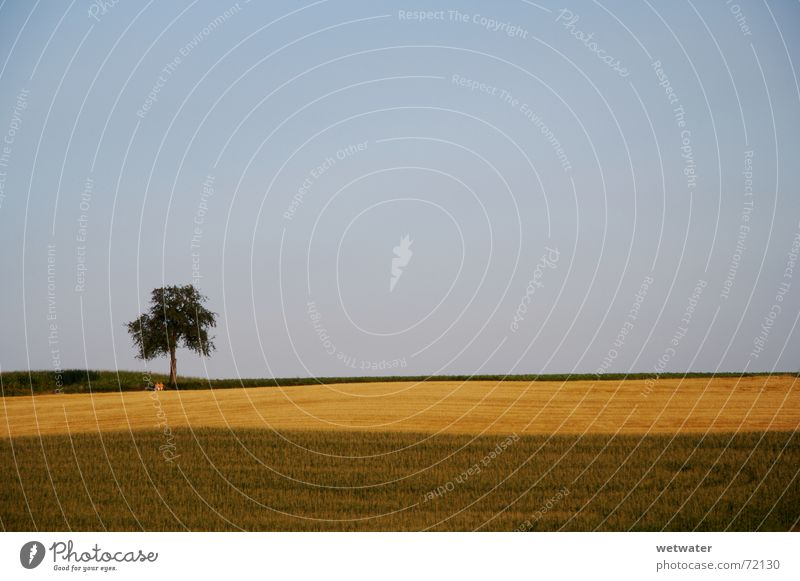 lonely tree Himmel Baum grün blau Sommer Einsamkeit Ferne Erholung Freiheit Landschaft braun Feld Deutschland Klarheit Hügel Landwirtschaft