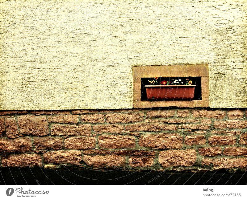 schöne Aussicht Fenster Blume Blumenkasten Fassade Wand Mauer Häusliches Leben Putz Sandstein Dekoration & Verzierung Grenzbefestigung Schmuck Pflanze begegnen