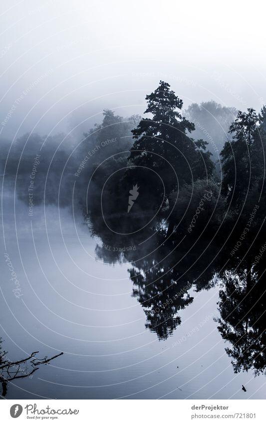 Nahe im Nebel Natur Ferien & Urlaub & Reisen blau Pflanze Baum Landschaft Freude schwarz Umwelt Gefühle Herbst Glück Stimmung Freizeit & Hobby Nebel Tourismus