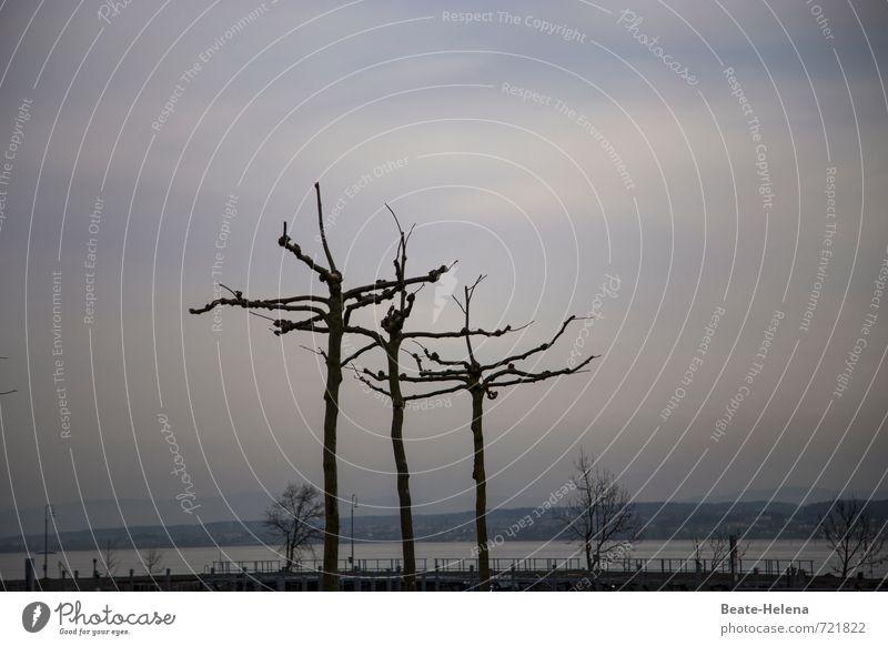 AST 7 | waiting for the sun Himmel Natur blau Baum Erholung Landschaft dunkel Wege & Pfade Frühling natürlich grau Wetter warten ästhetisch nass beobachten