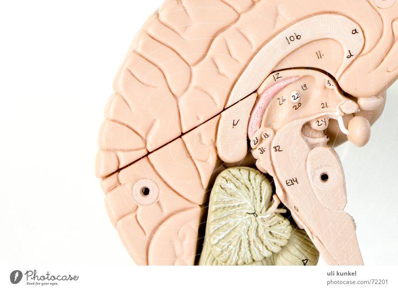 Gehirn Denken Kreis Gesundheitswesen Gedanke Wissen klug Erinnerung Gehirn u. Nerven Anatomie Verständnis begreifen Logik Neurologie